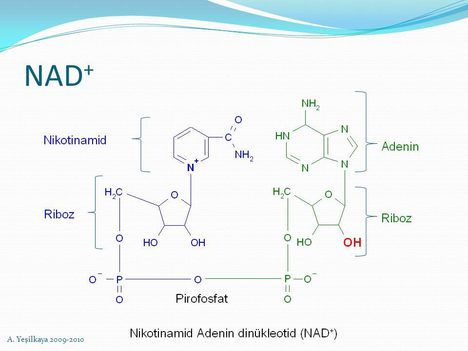 NAD + A. Yeşilkaya 2009-2010