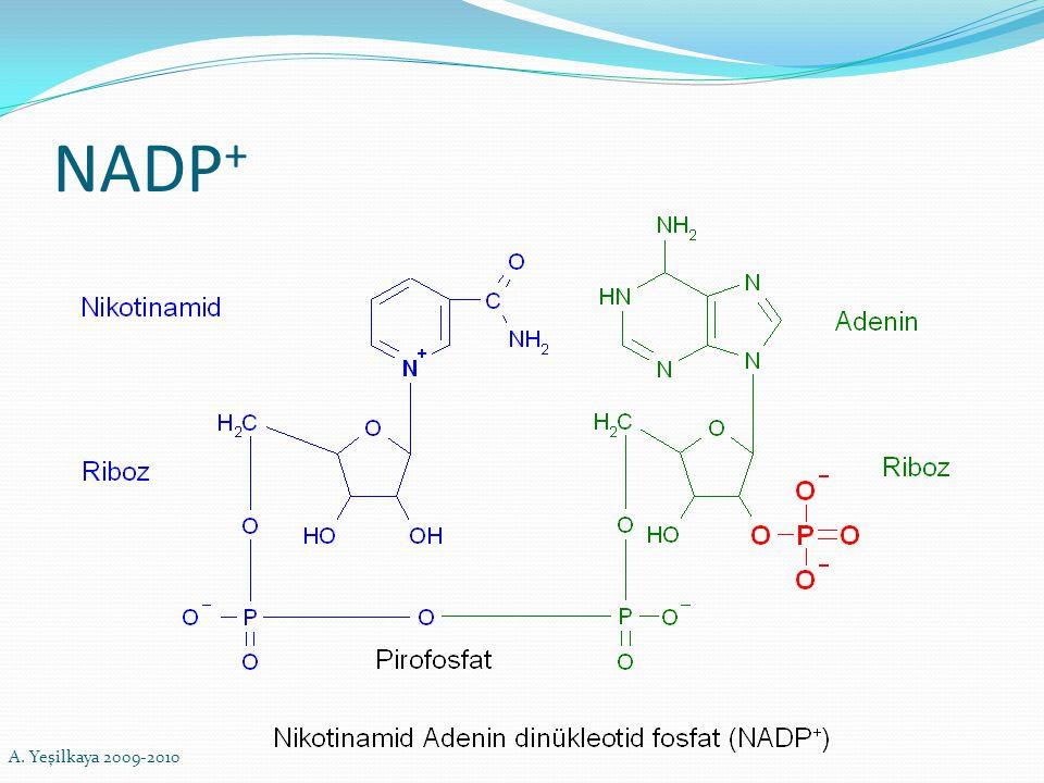 NADP + A. Yeşilkaya 2009-2010