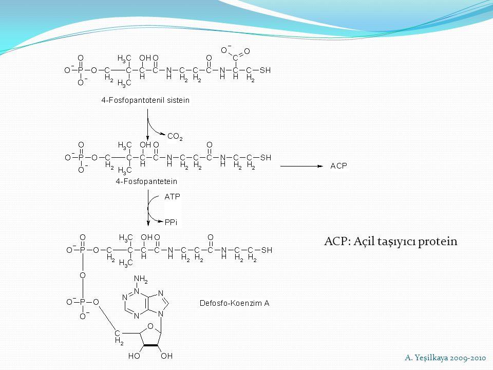 ACP: Açil taşıyıcı protein A. Yeşilkaya 2009-2010