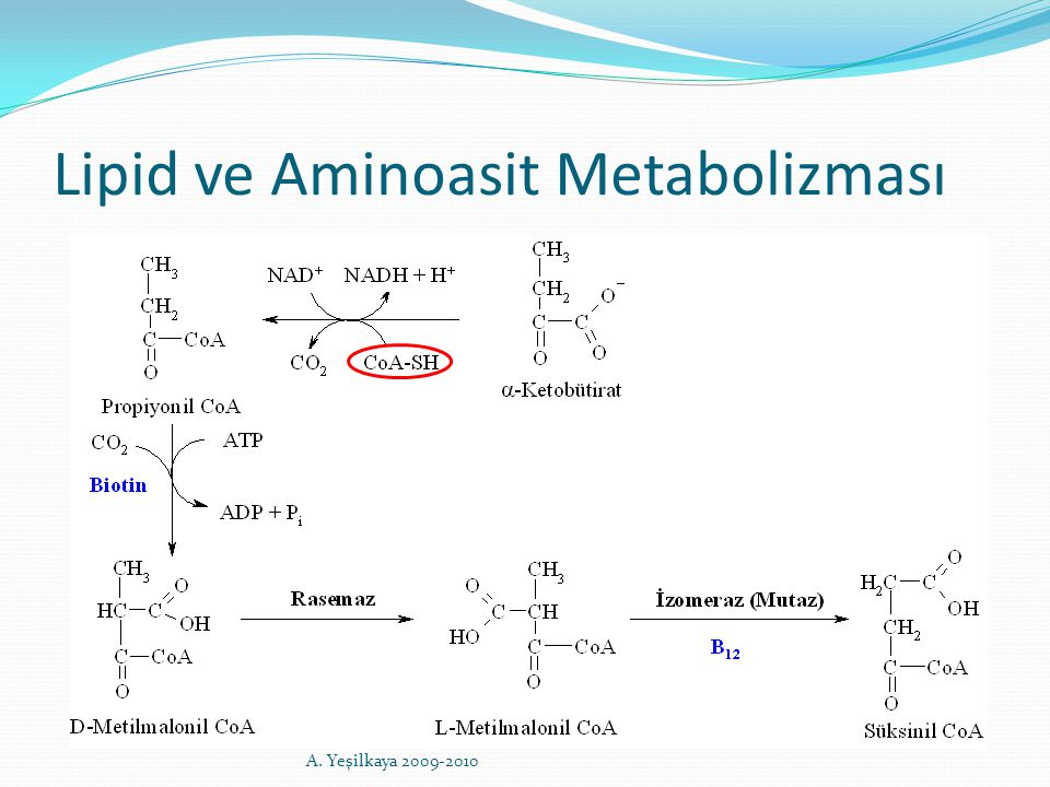 Lipid ve Aminoasit Metabolizması A. Yeşilkaya 2009-2010