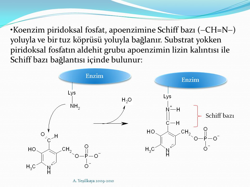 Enzim Schiff bazı Koenzim piridoksal fosfat, apoenzimine Schiff bazı (  CH=N  ) yoluyla ve bir tuz köprüsü yoluyla bağlanır. Substrat yokken piridok