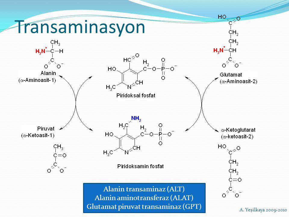 Transaminasyon Alanin transaminaz (ALT) Alanin aminotransferaz (ALAT) Glutamat piruvat transaminaz (GPT) A. Yeşilkaya 2009-2010