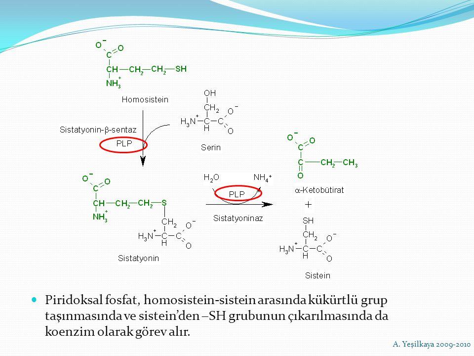 Piridoksal fosfat, homosistein-sistein arasında kükürtlü grup taşınmasında ve sistein'den  SH grubunun çıkarılmasında da koenzim olarak görev alır. A