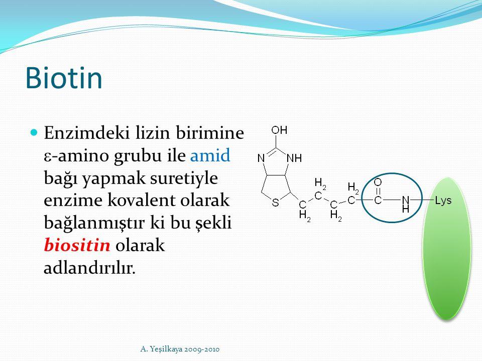 Biotin Enzimdeki lizin birimine  -amino grubu ile amid bağı yapmak suretiyle enzime kovalent olarak bağlanmıştır ki bu şekli biositin olarak adlandır