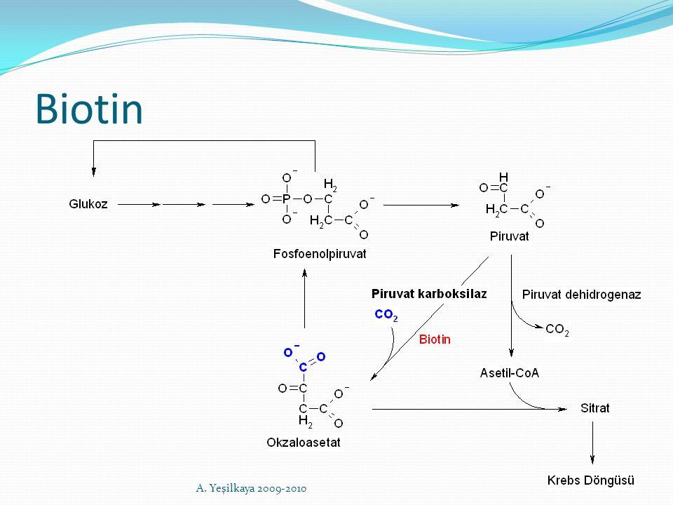 Biotin A. Yeşilkaya 2009-2010