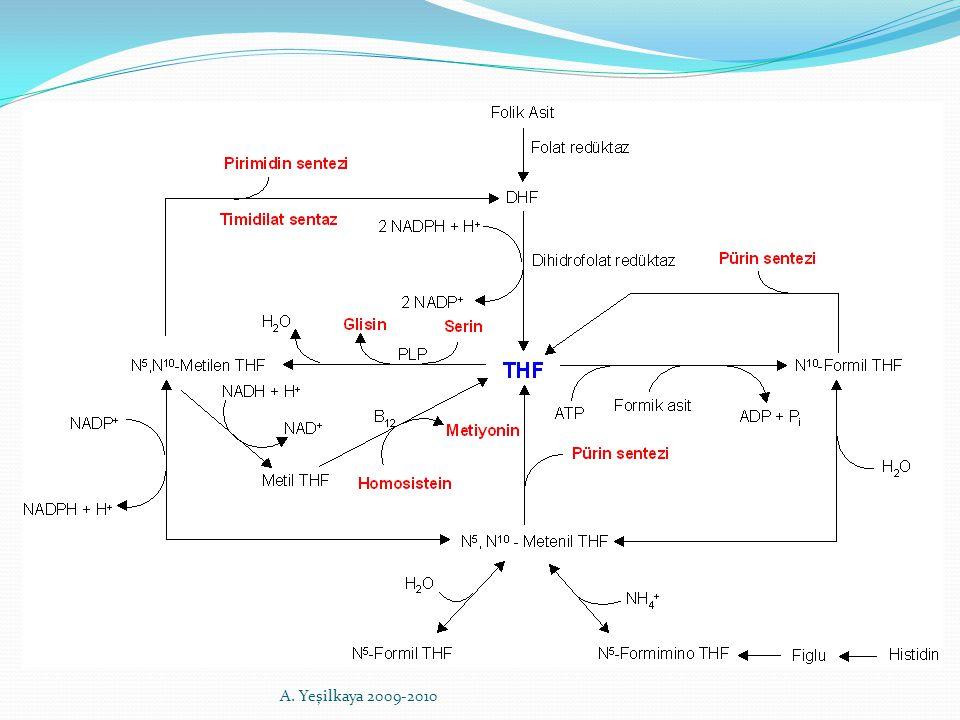 N 5 -Metil tetrahidrofolat, vitamin B12 varlığında homosisteine metil vericisi olarak davranır.
