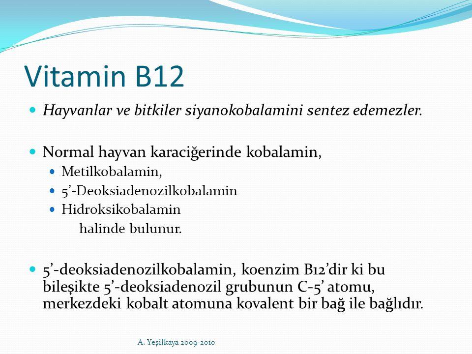Vitamin B12 Hayvanlar ve bitkiler siyanokobalamini sentez edemezler. Normal hayvan karaciğerinde kobalamin, Metilkobalamin, 5'-Deoksiadenozilkobalamin