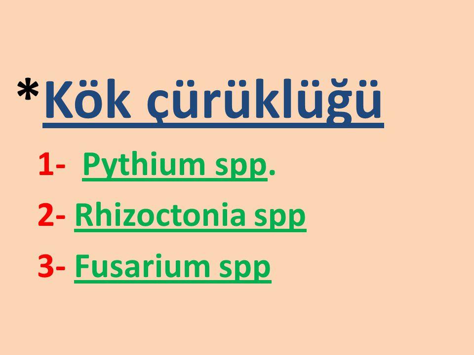 KÖK BOĞAZI YANIKLIĞI HASTALIĞI (Phytophthora capsici)