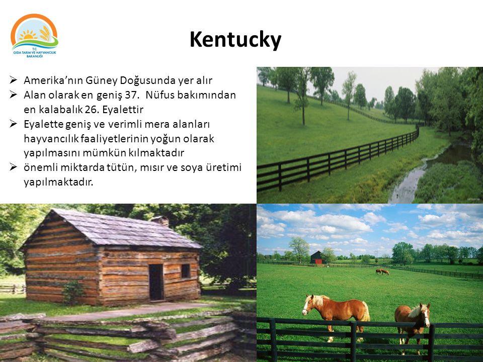 Kentucky  Amerika'nın Güney Doğusunda yer alır  Alan olarak en geniş 37. Nüfus bakımından en kalabalık 26. Eyalettir  Eyalette geniş ve verimli mer