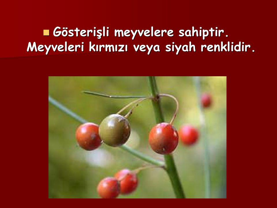Gösterişli meyvelere sahiptir. Meyveleri kırmızı veya siyah renklidir. Gösterişli meyvelere sahiptir. Meyveleri kırmızı veya siyah renklidir.