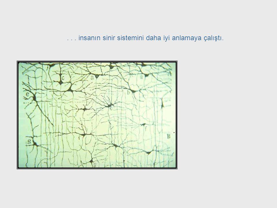 Nörofizyoloji + Matematik + Felsefe Warren McCulloch sibernetiğin kapsamını genişletme konusunda kilit isimlerden biriydi. Esas eğitimini psikiatrist