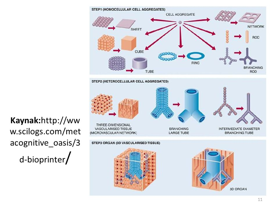 Kaynak:http://ww w.scilogs.com/met acognitive_oasis/3 d-bioprinter / 11