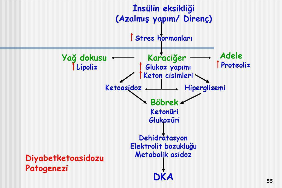 55 İnsülin eksikliği (Azalmış yapım/ Direnç) Stres hormonları Yağ dokusu Lipoliz Karaciğer Glukoz yapımı Keton cisimleri Adele Proteoliz KetoasidozHip