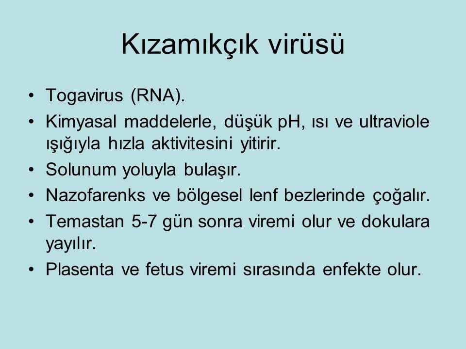 Kızamıkçık virüsü Togavirus (RNA).