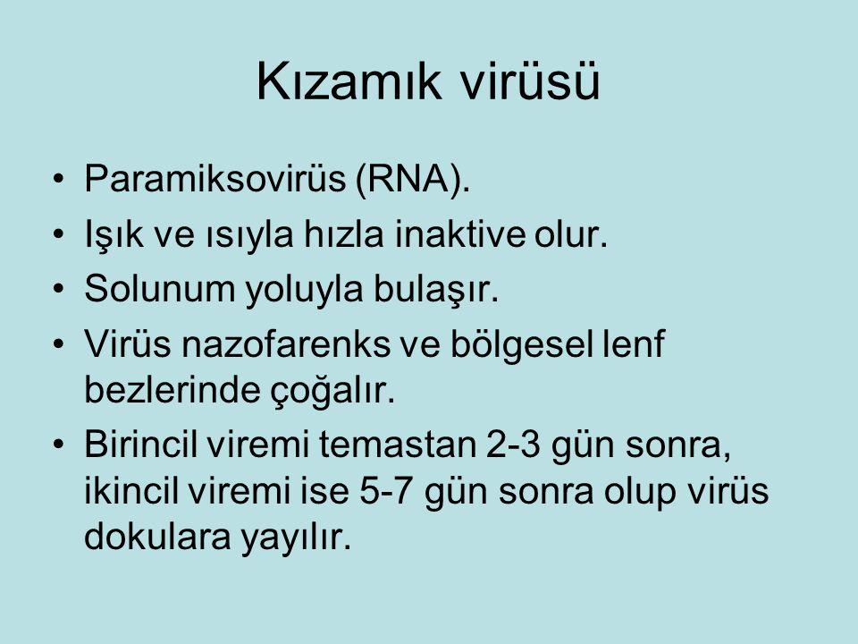 Kızamık virüsü Paramiksovirüs (RNA).Işık ve ısıyla hızla inaktive olur.