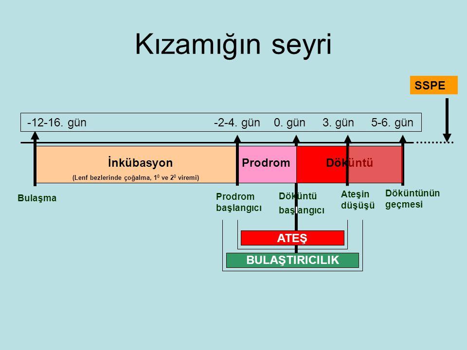 Kızamığın seyri Bulaşma İnkübasyon (Lenf bezlerinde çoğalma, 1 0 ve 2 0 viremi) ProdromDöküntü Prodrom başlangıcı Döküntü başlangıcı Ateşin düşüşü Döküntünün geçmesi -12-16.