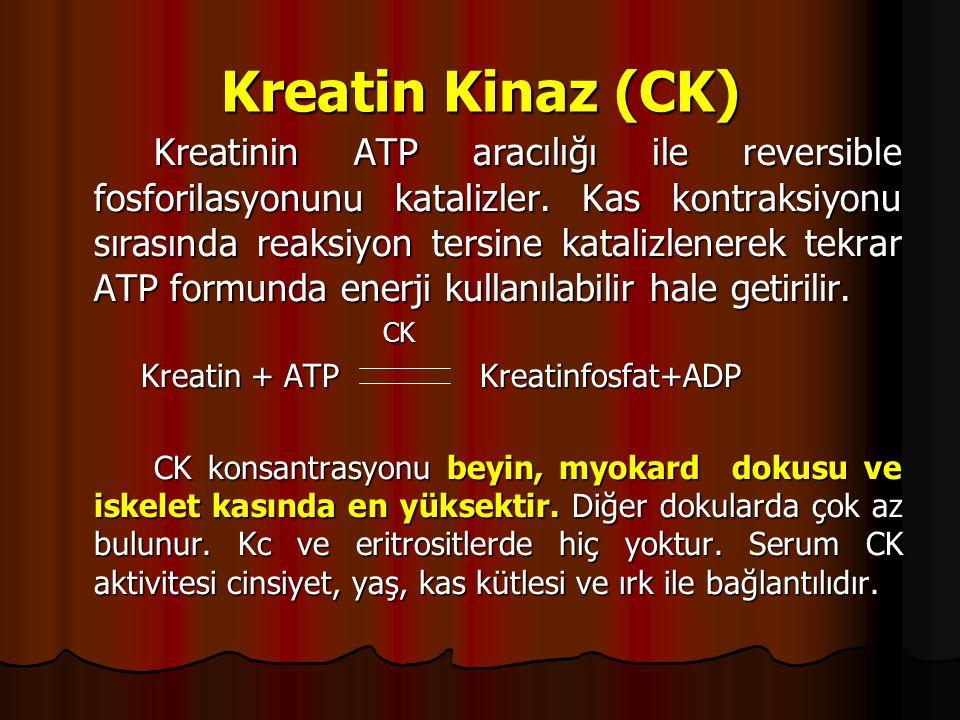 Kreatin Kinaz (CK) Kreatinin ATP aracılığı ile reversible fosforilasyonunu katalizler.