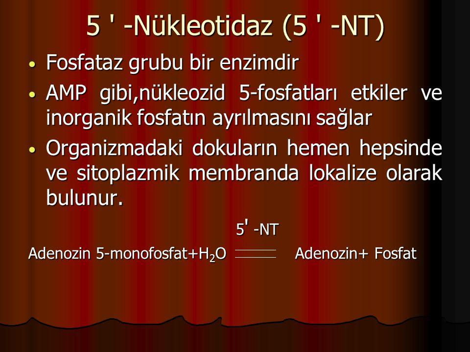 5 -Nükleotidaz (5 -NT) Fosfataz grubu bir enzimdir Fosfataz grubu bir enzimdir AMP gibi,nükleozid 5-fosfatları etkiler ve inorganik fosfatın ayrılmasını sağlar AMP gibi,nükleozid 5-fosfatları etkiler ve inorganik fosfatın ayrılmasını sağlar Organizmadaki dokuların hemen hepsinde ve sitoplazmik membranda lokalize olarak bulunur.