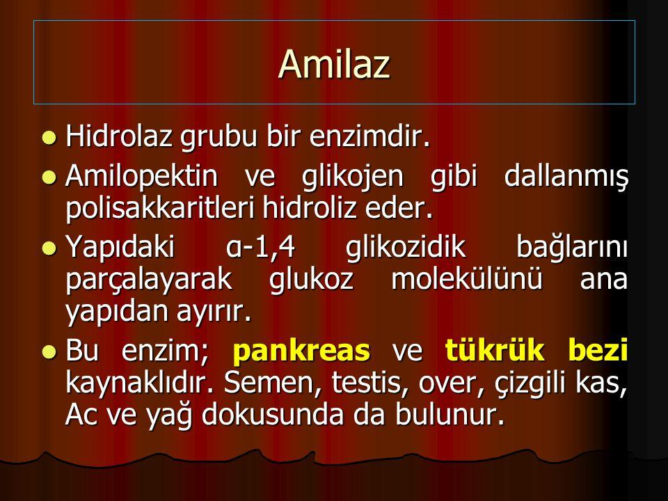Amilaz Hidrolaz grubu bir enzimdir.Hidrolaz grubu bir enzimdir.