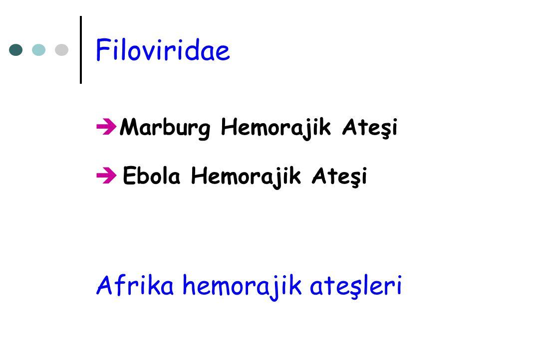 Filoviridae  Marburg Hemorajik Ateşi  Ebola Hemorajik Ateşi Afrika hemorajik ateşleri
