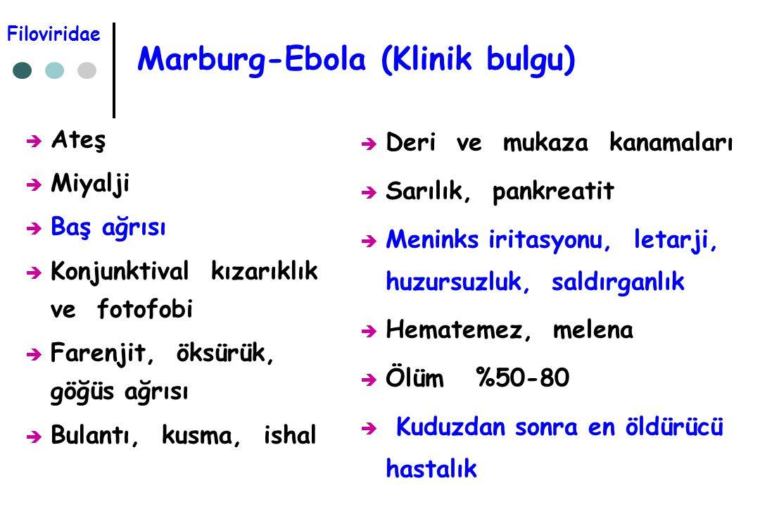 Marburg-Ebola (Klinik bulgu)  Ateş  Miyalji  Baş ağrısı  Konjunktival kızarıklık ve fotofobi  Farenjit, öksürük, göğüs ağrısı  Bulantı, kusma, i