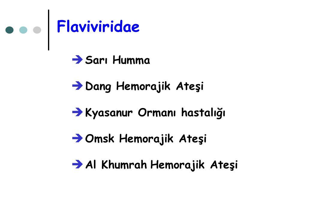 Flaviviridae  Sarı Humma  Dang Hemorajik Ateşi  Kyasanur Ormanı hastalığı  Omsk Hemorajik Ateşi  Al Khumrah Hemorajik Ateşi