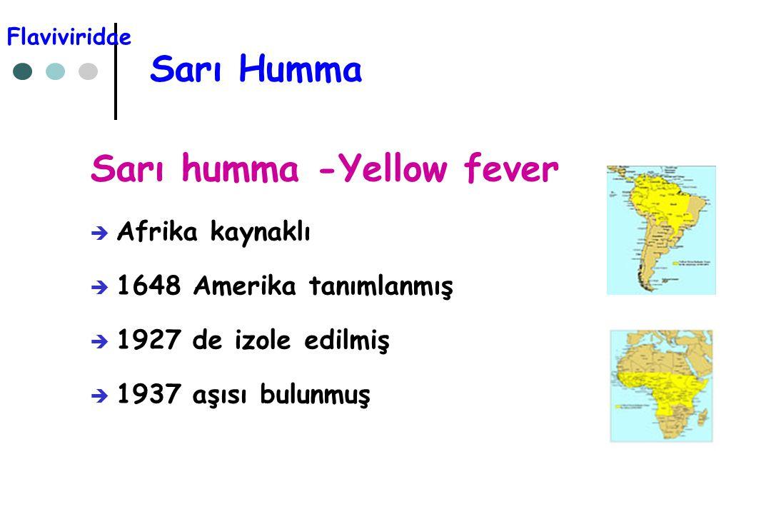 Sarı Humma Sarı humma -Yellow fever  Afrika kaynaklı  1648 Amerika tanımlanmış  1927 de izole edilmiş  1937 aşısı bulunmuş Flaviviridae