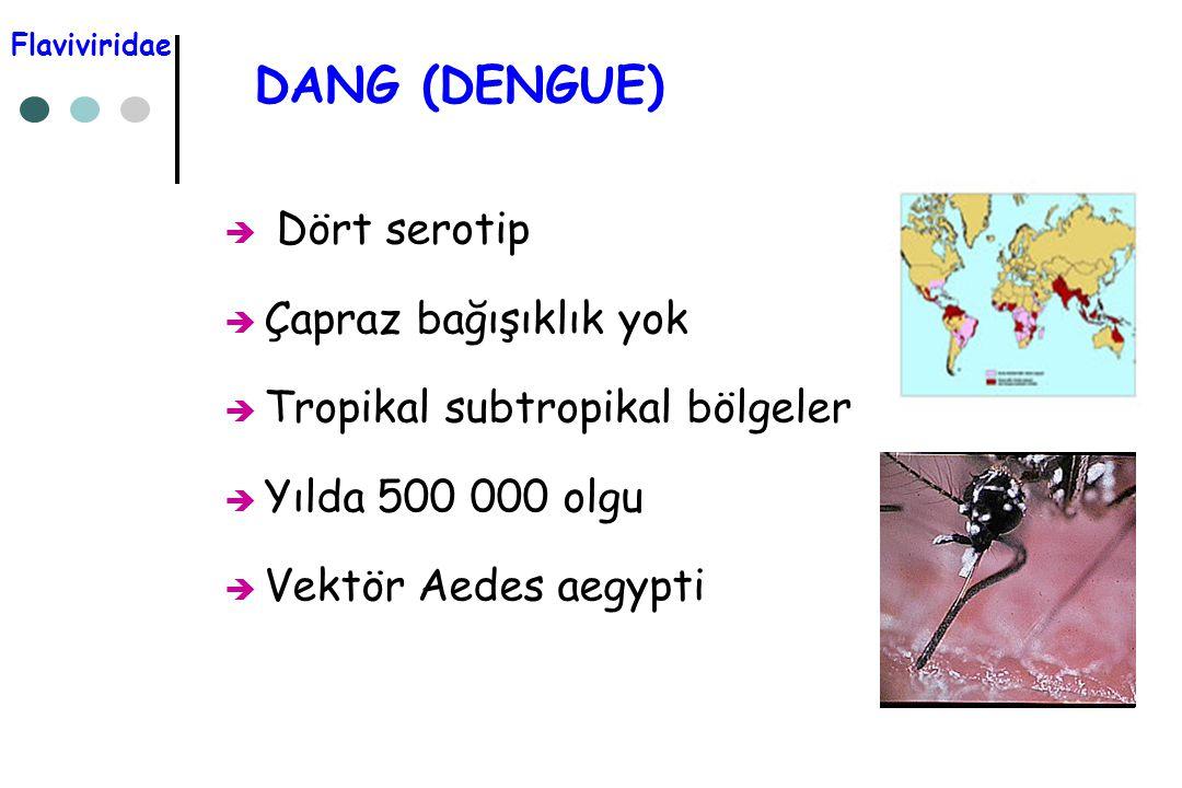 DANG (DENGUE)  Dört serotip  Çapraz bağışıklık yok  Tropikal subtropikal bölgeler  Yılda 500 000 olgu  Vektör Aedes aegypti Flaviviridae