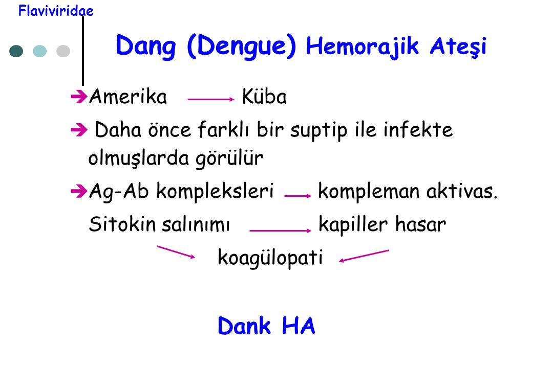 Dang (Dengue) Hemorajik Ateşi  Amerika Küba  Daha önce farklı bir suptip ile infekte olmuşlarda görülür  Ag-Ab kompleksleri kompleman aktivas. Sito