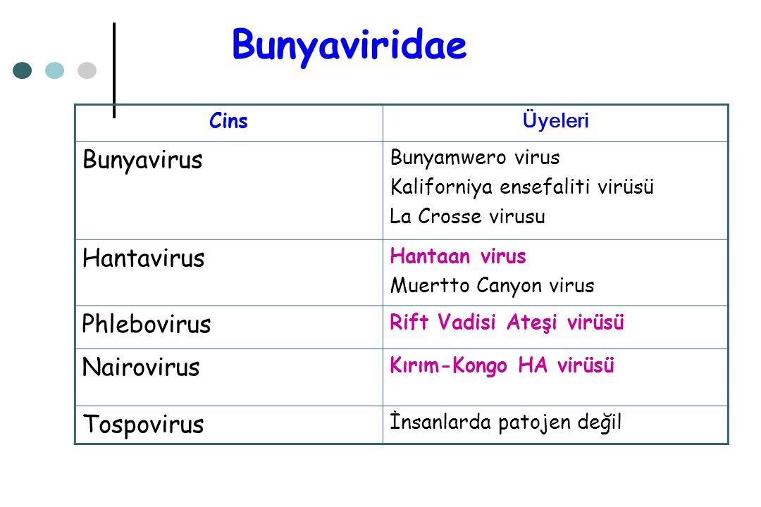 Bunyaviridae Cins Üyeleri Bunyavirus Bunyamwero virus Kaliforniya ensefaliti virüsü La Crosse virusu Hantavirus Hantaan virus Muertto Canyon virus Phl