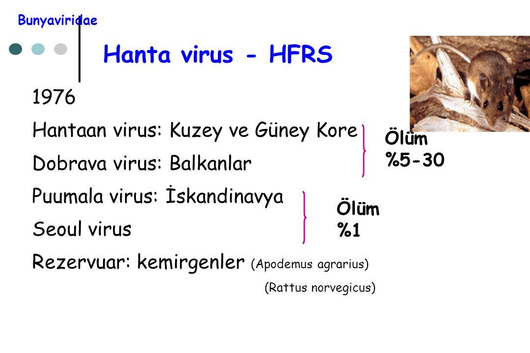Hanta virus - HFRS 1976 Hantaan virus: Kuzey ve Güney Kore Dobrava virus: Balkanlar Puumala virus: İskandinavya Seoul virus Rezervuar: kemirgenler (Ap