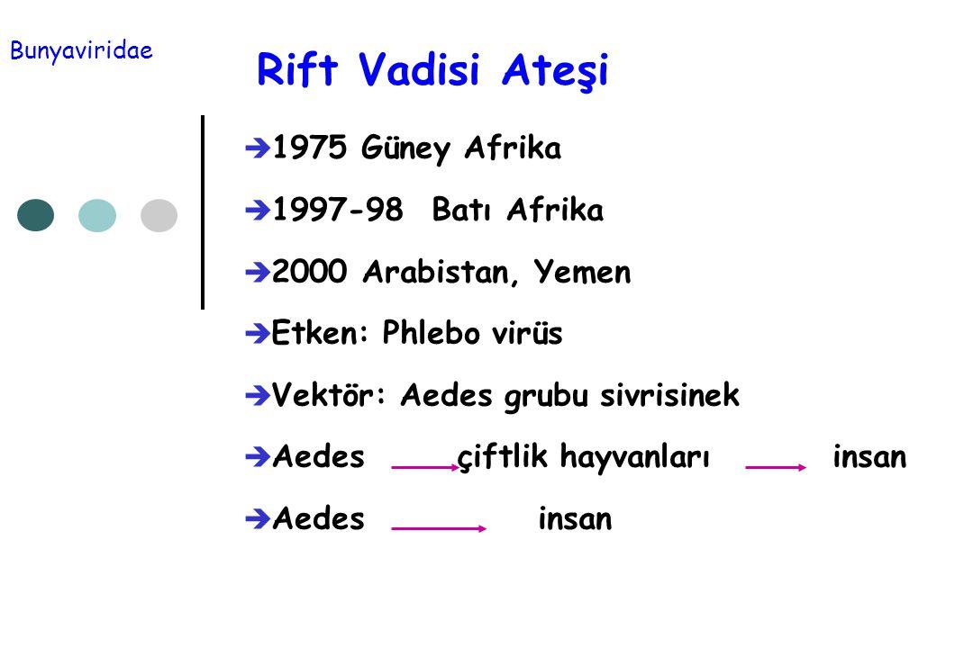 Rift Vadisi Ateşi  1975 Güney Afrika  1997-98 Batı Afrika  2000 Arabistan, Yemen  Etken: Phlebo virüs  Vektör: Aedes grubu sivrisinek  Aedes çif