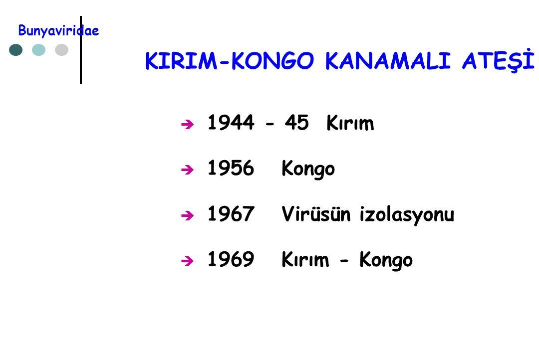 KIRIM-KONGO KANAMALI ATEŞİ  1944 - 45 Kırım  1956 Kongo  1967 Virüsün izolasyonu  1969 Kırım - Kongo Bunyaviridae