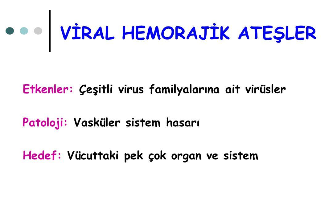 VİRAL HEMORAJİK ATEŞLER Etkenler: Çeşitli virus familyalarına ait virüsler Patoloji: Vasküler sistem hasarı Hedef: Vücuttaki pek çok organ ve sistem