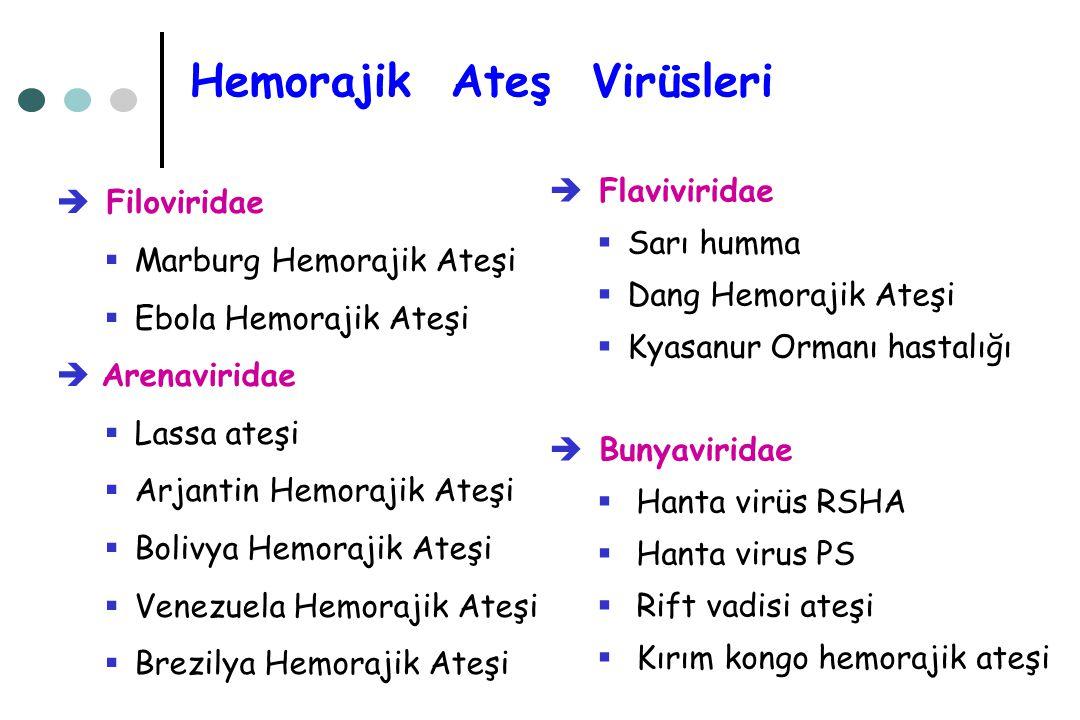 Hemorajik Ateş Virüsleri  Filoviridae  Marburg Hemorajik Ateşi  Ebola Hemorajik Ateşi  Arenaviridae  Lassa ateşi  Arjantin Hemorajik Ateşi  Bol