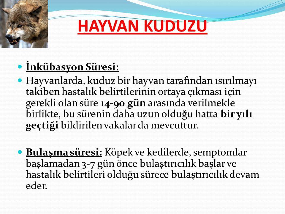 İnkübasyon Süresi: Hayvanlarda, kuduz bir hayvan tarafından ısırılmayı takiben hastalık belirtilerinin ortaya çıkması için gerekli olan süre 14-90 gün