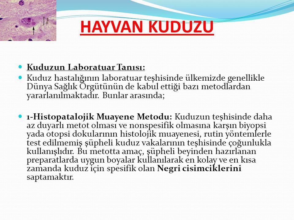 Kuduzun Laboratuar Tanısı: Kuduz hastalığının laboratuar teşhisinde ülkemizde genellikle Dünya Sağlık Örgütünün de kabul ettiği bazı metodlardan yarar