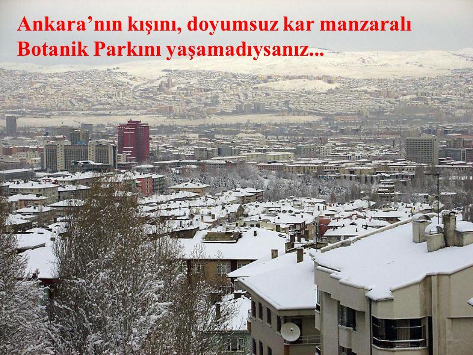 Ankara'nın kışını, doyumsuz kar manzaralı Botanik Parkını yaşamadıysanız...