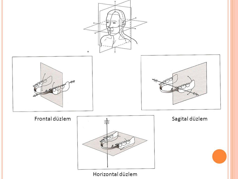 Sagital düzlemFrontal düzlem Horizontal düzlem