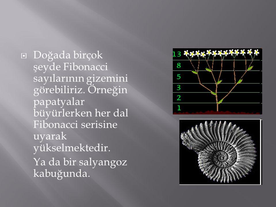  Doğada birçok şeyde Fibonacci sayılarının gizemini görebiliriz. Örneğin papatyalar büyürlerken her dal Fibonacci serisine uyarak yükselmektedir. Ya