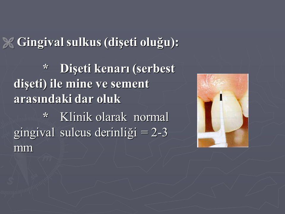  Gingival sulkus (dişeti oluğu): * Dişeti kenarı (serbest dişeti) ile mine ve sement arasındaki dar oluk * Dişeti kenarı (serbest dişeti) ile mine ve