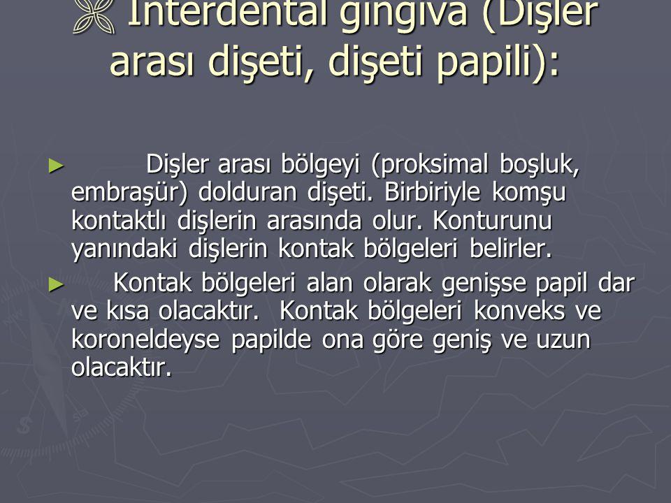  Interdental gingiva (Dişler arası dişeti, dişeti papili): ► Dişler arası bölgeyi (proksimal boşluk, embraşür) dolduran dişeti. Birbiriyle komşu kont