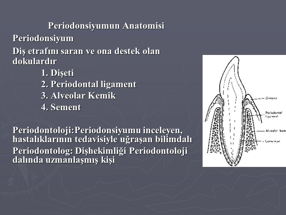 Periodonsiyumun Anatomisi Periodonsiyum Diş etrafını saran ve ona destek olan dokulardır 1. Dişeti 2. Periodontal ligament 3. Alveolar Kemik 4. Sement