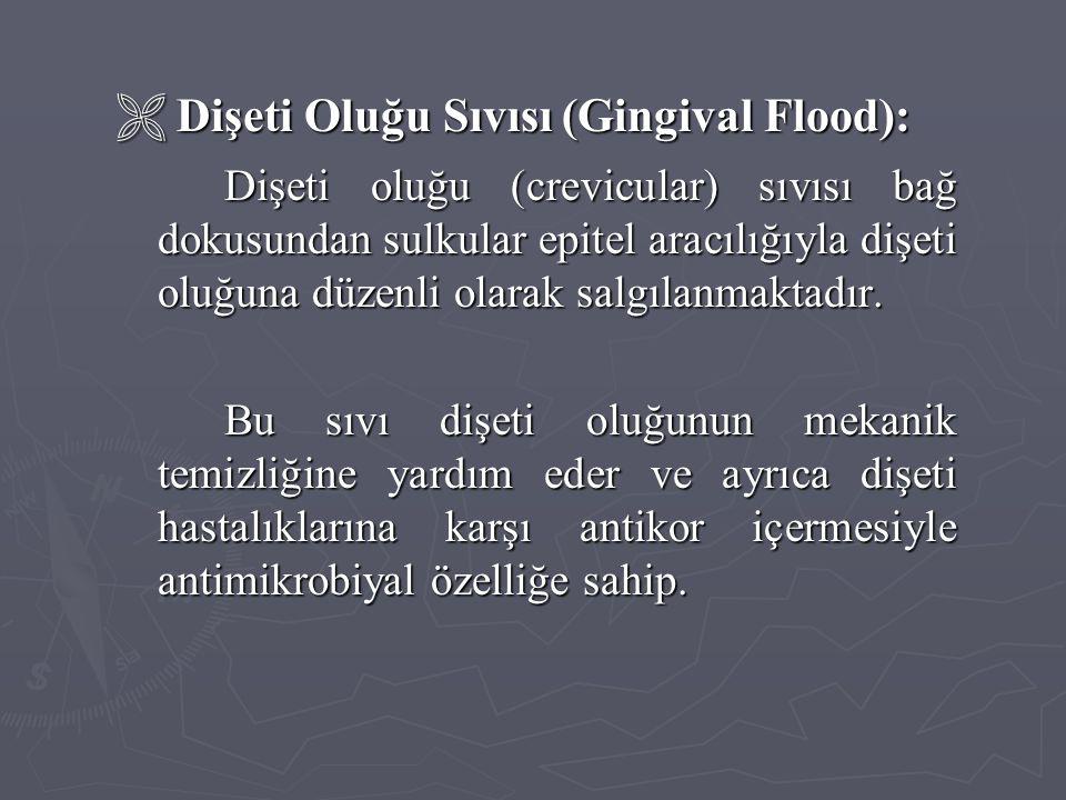  Dişeti Oluğu Sıvısı (Gingival Flood): Dişeti oluğu (crevicular) sıvısı bağ dokusundan sulkular epitel aracılığıyla dişeti oluğuna düzenli olarak sal