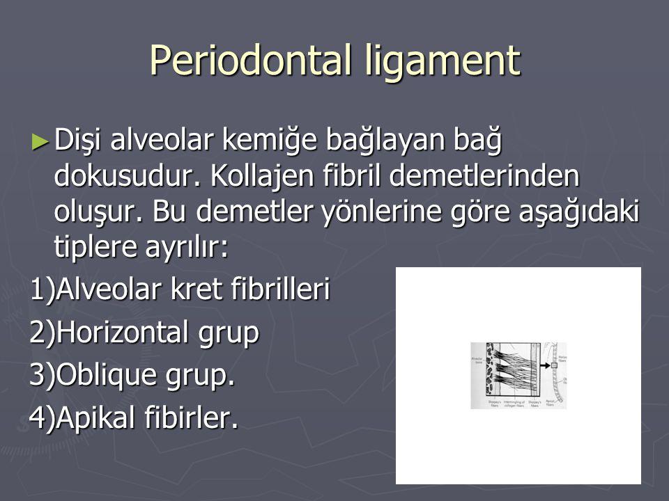 Periodontal ligament ► Dişi alveolar kemiğe bağlayan bağ dokusudur. Kollajen fibril demetlerinden oluşur. Bu demetler yönlerine göre aşağıdaki tiplere