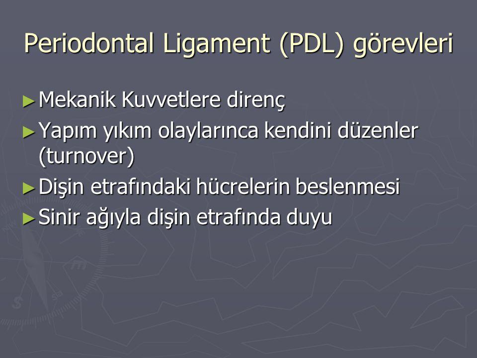 Periodontal Ligament (PDL) görevleri ► Mekanik Kuvvetlere direnç ► Yapım yıkım olaylarınca kendini düzenler (turnover) ► Dişin etrafındaki hücrelerin