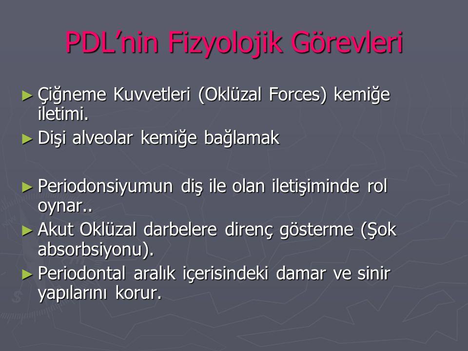PDL'nin Fizyolojik Görevleri ► Çiğneme Kuvvetleri (Oklüzal Forces) kemiğe iletimi. ► Dişi alveolar kemiğe bağlamak ► Periodonsiyumun diş ile olan ilet