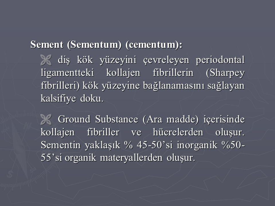 Sement (Sementum) (cementum):  diş kök yüzeyini çevreleyen periodontal ligamentteki kollajen fibrillerin (Sharpey fibrilleri) kök yüzeyine bağlanamas