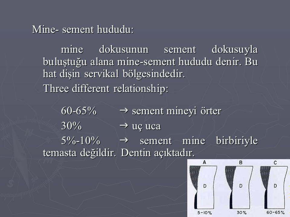 Mine- sement hududu: mine dokusunun sement dokusuyla buluştuğu alana mine-sement hududu denir. Bu hat dişin servikal bölgesindedir. Three different re