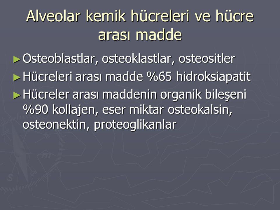 Alveolar kemik hücreleri ve hücre arası madde ► Osteoblastlar, osteoklastlar, osteositler ► Hücreleri arası madde %65 hidroksiapatit ► Hücreler arası